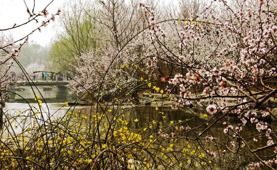 春风吹皱碧波水,植物园里满园春 - 侠义客 - 伊大成 的博客