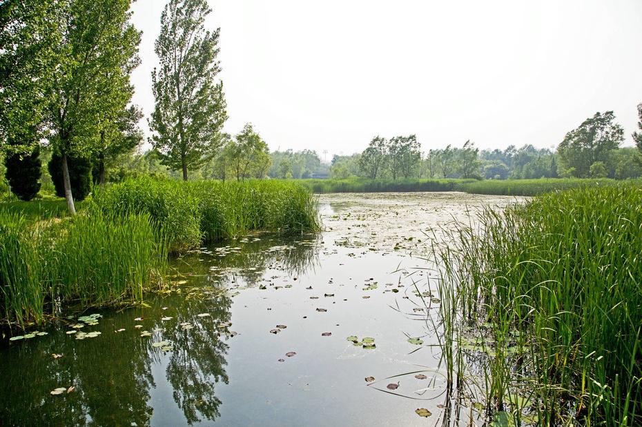 奥林匹克森林公园湿地野趣 - 侠义客 - 伊大成 的博客