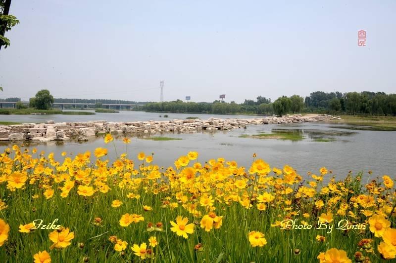 【原创影记】印象弥河湿地公园2: 花映河秀 - 古藤新枝 - 古藤的博客
