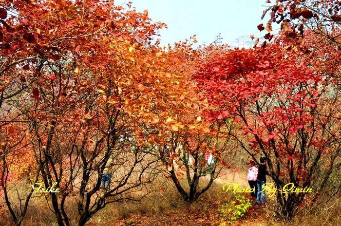 【原创影记】齐鲁观红叶——博山和尚房1 - 古藤新枝 - 古藤的博客