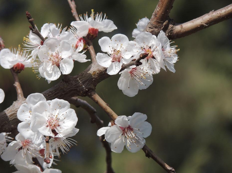 【摄影园地】春天来了 - 留石 - 留石的博客