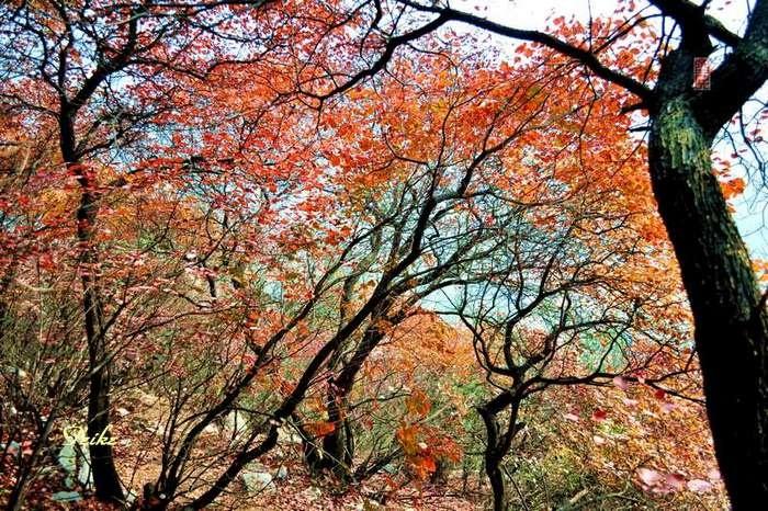 【原创影记】齐鲁观红叶——青州红叶山1 - 古藤新枝 - 古藤的博客