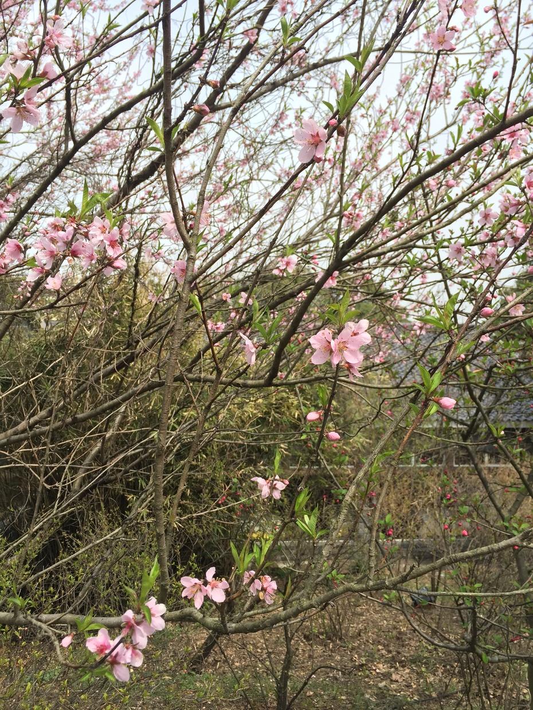 慢游穹窿山 - 蔷薇花开 - 蔷薇花开的博客