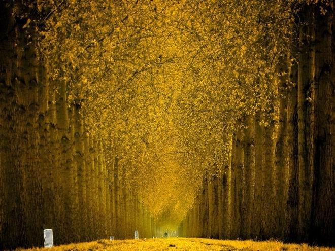 最美的林荫大道高清图片