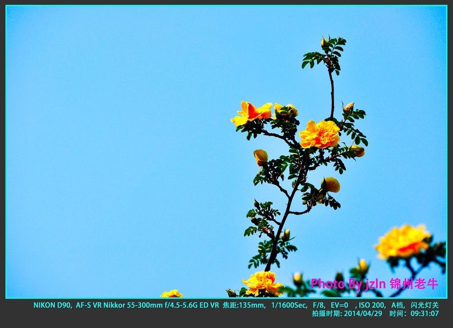 【摄影园地】——满园春色 - 锦州老牛 - 锦州老牛的博客