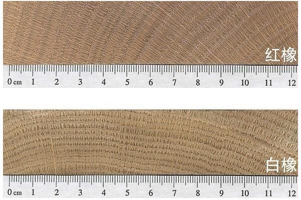 如何区分红橡和白橡? - 国林地板 - 国林木业的博客