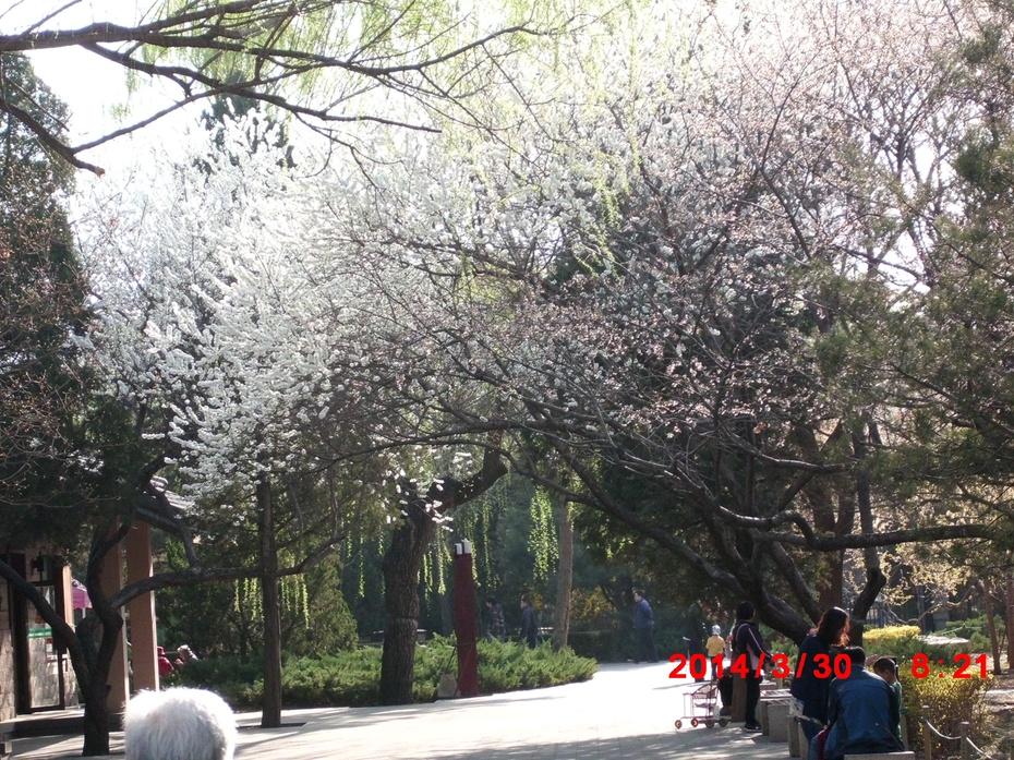 桃花朵朵开2 - ydq200888 - ydq200888的博客