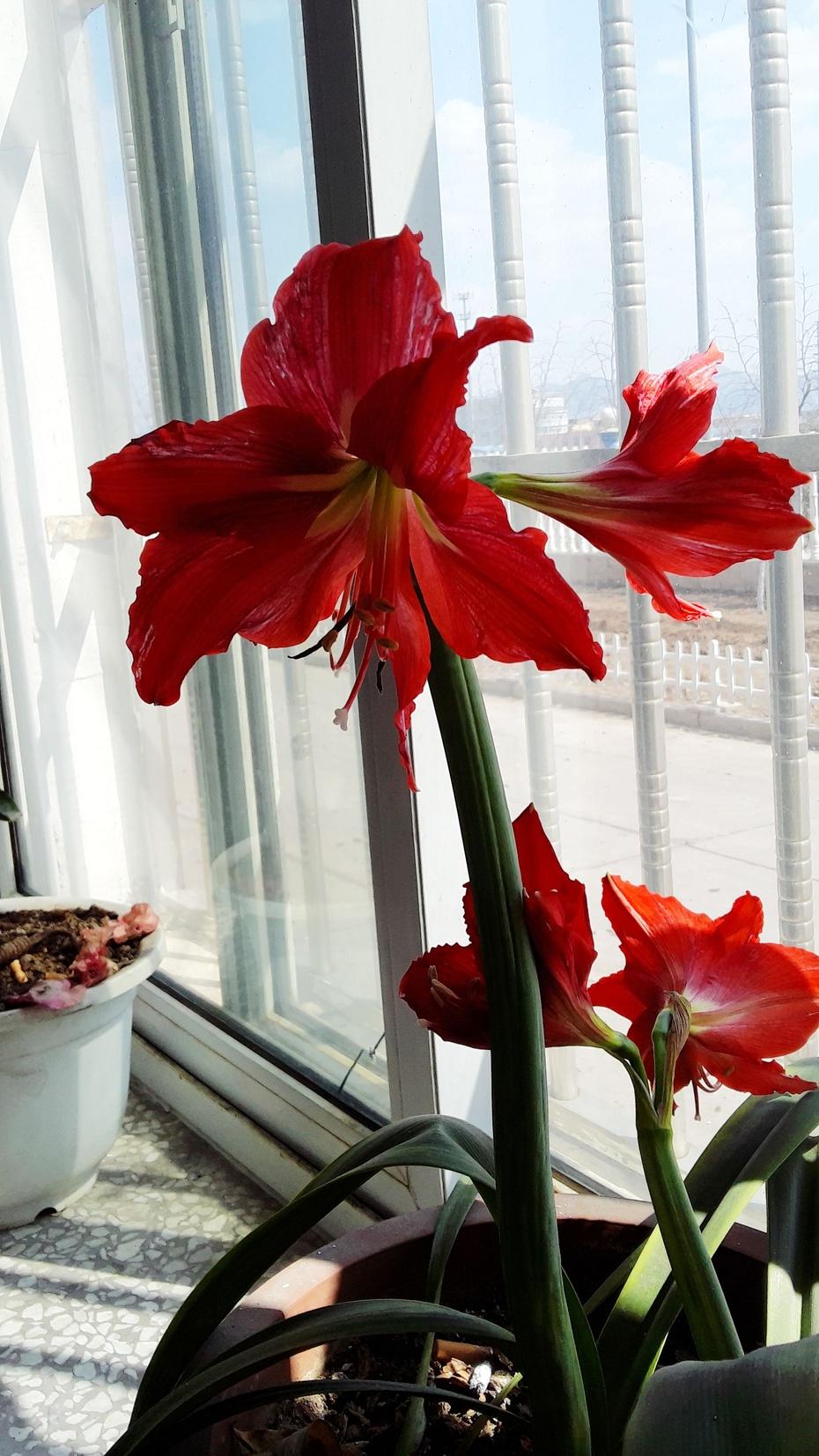对红花开 - 淡淡云 - 淡淡云