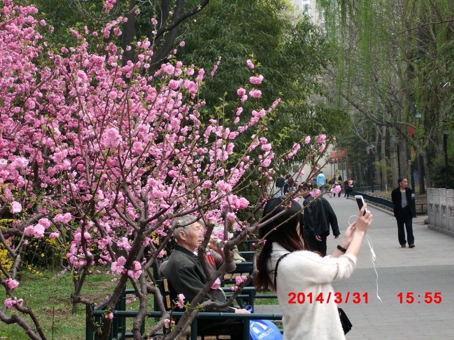 春到紫竹花满园(摄影) - ydq200888 - ydq200888的博客