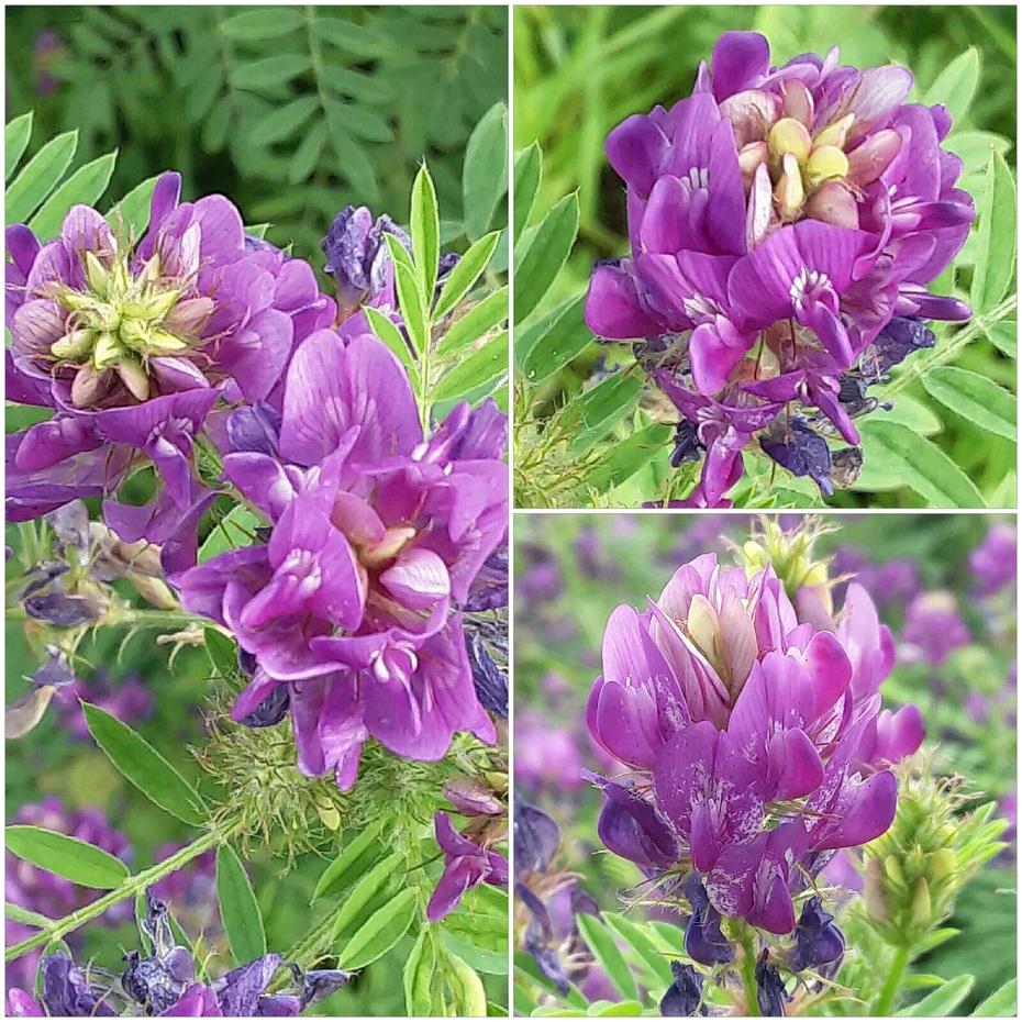 花卉之:野花(2) - 淡淡云 - 淡淡云