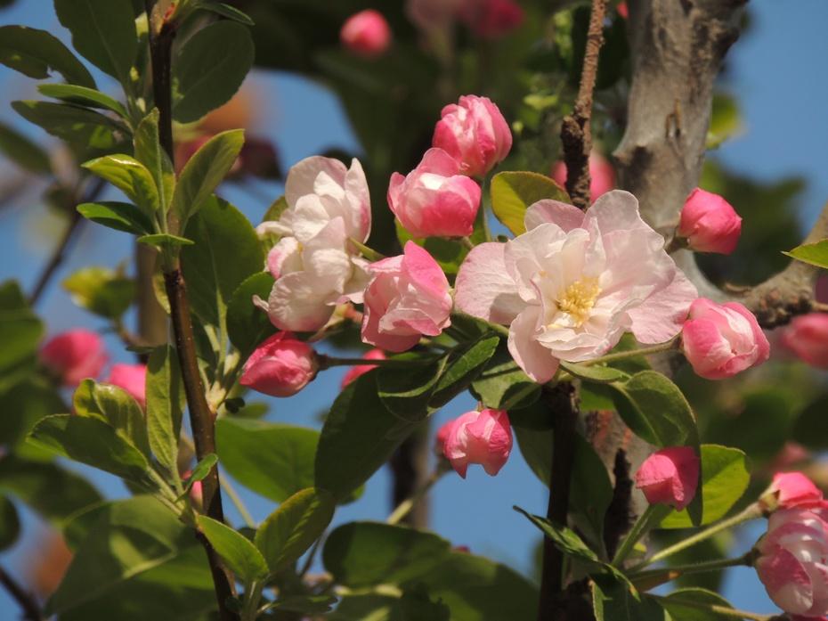 【摄影园地】无名花卉展奇葩 - 留石 - 留石的博客