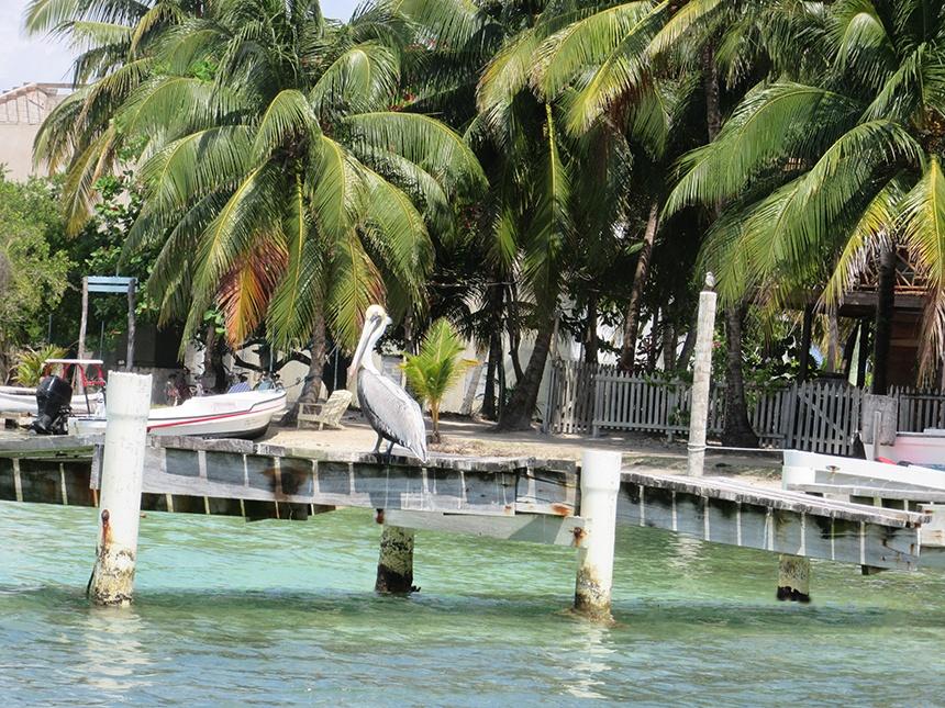 加勒比海小岛潜游 - sihaiyunyou - sihaiyunyou的博客