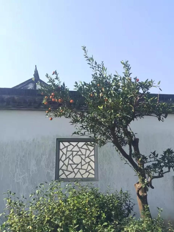 东山一日 - 蔷薇花开 - 蔷薇花开的博客