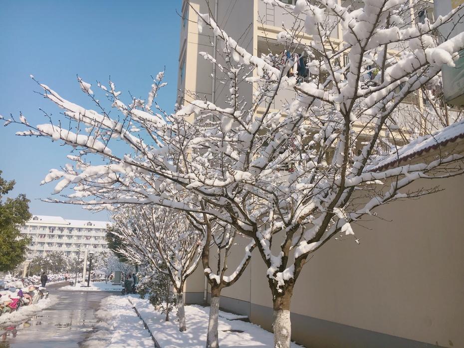 江苏雪 - 蔷薇花开 - 蔷薇花开的博客