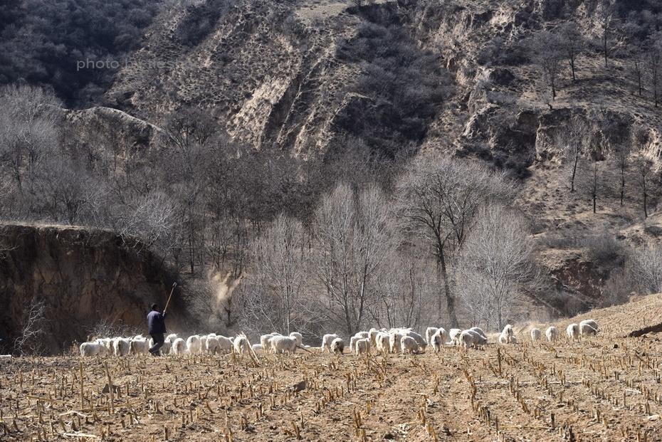 陕北风情(11)—— 魏塔放羊倌_图1-16