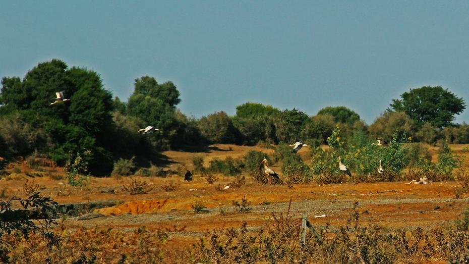 乌达亚古堡波涛涌,大西洋畔非洲洞--游西葡摩直之十九 - 侠义客 - 伊大成 的博客