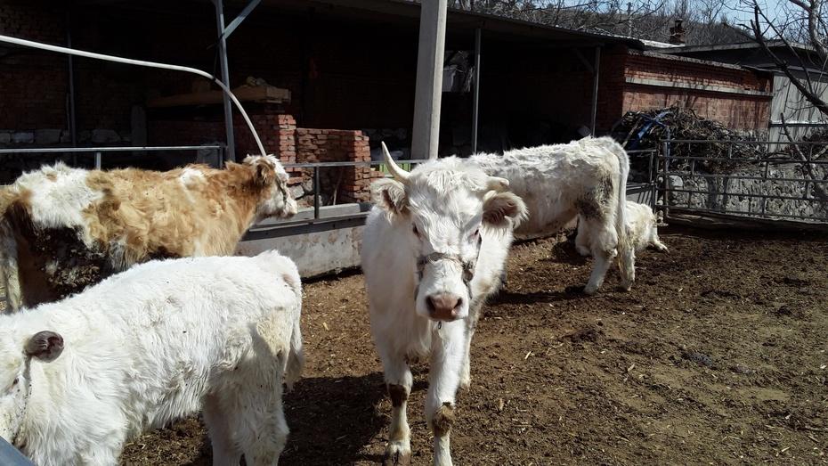 动物篇:驴牛羊 - 淡淡云 - 淡淡云