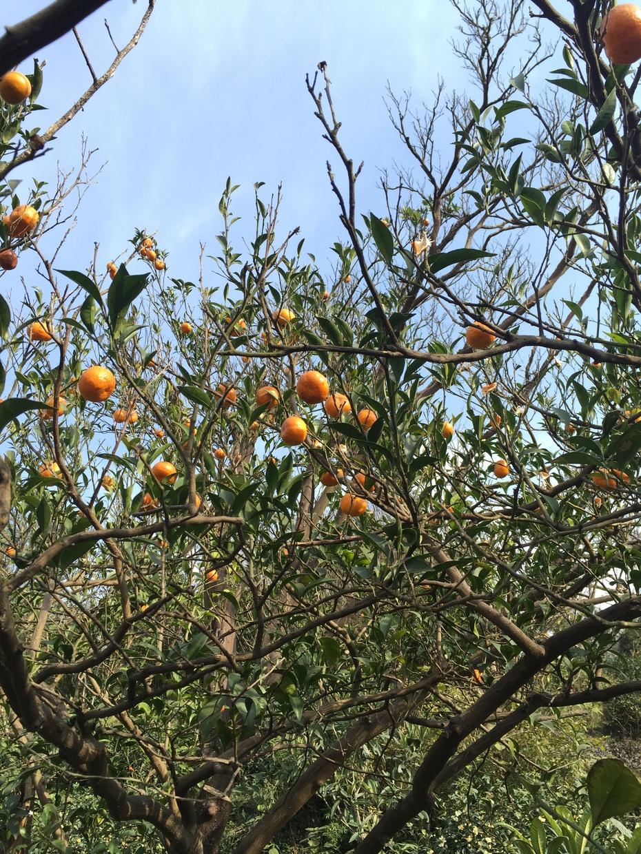 西山好风光 - 蔷薇花开 - 蔷薇花开的博客