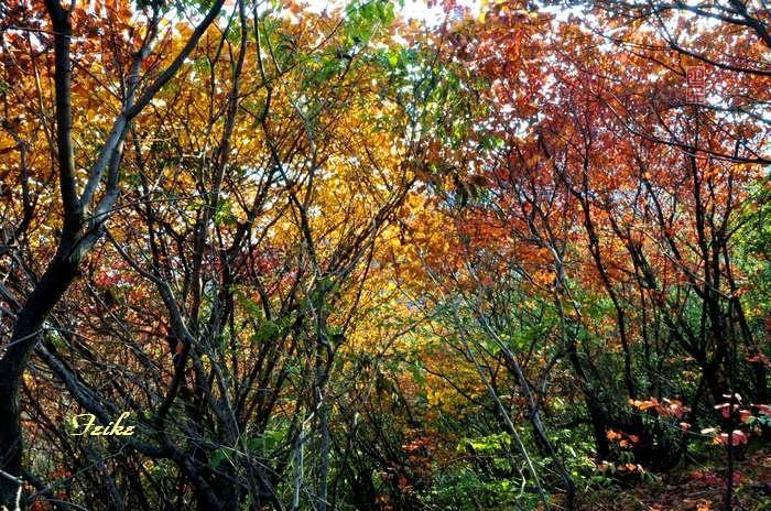 【原创影记】齐鲁观红叶——青州滴水崖1 - 古藤新枝 - 古藤的博客