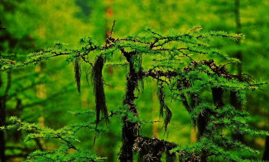 莫尔道嘎森林公园,红豆坡前一目九岭—暑期东北行之二十六 - 侠义客 - 伊大成 的博客