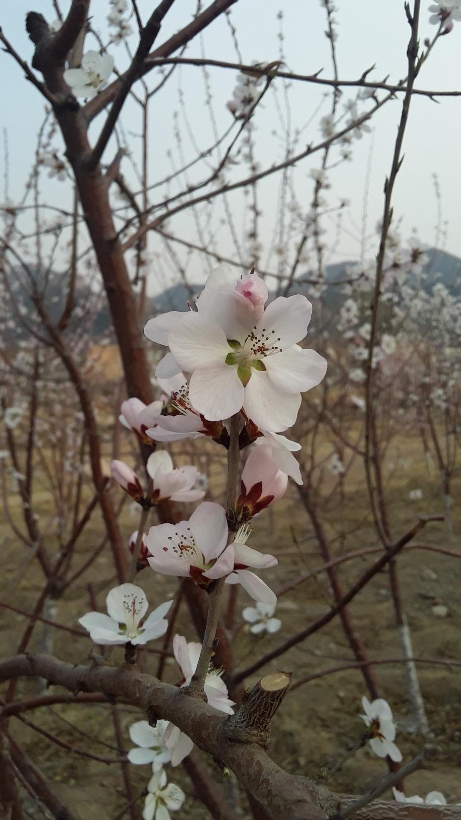 那花儿开得正艳 - 淡淡云 - 淡淡云