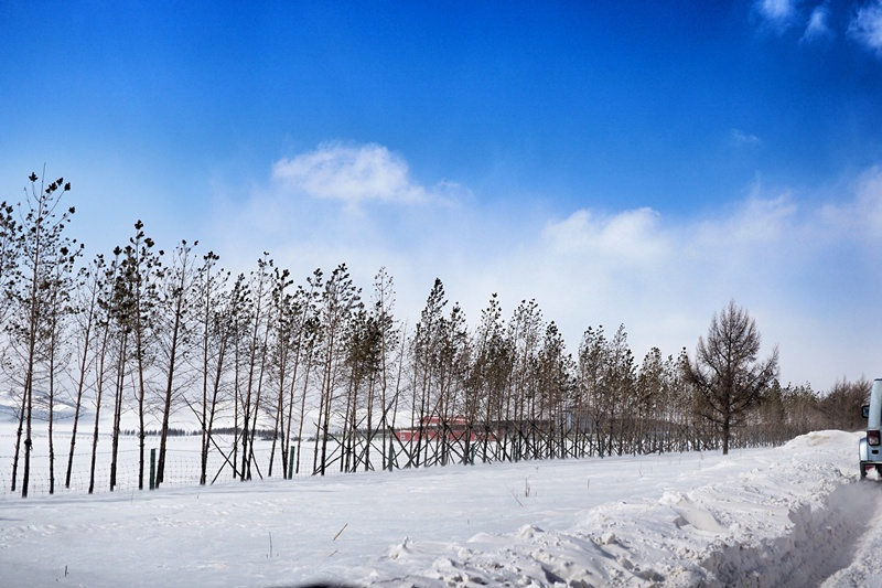 【周若雪Patty】比亚迪唐带我驰骋在冰雪覆盖的乌兰布统草原上 - 周若雪Patty - 周若雪Patty
