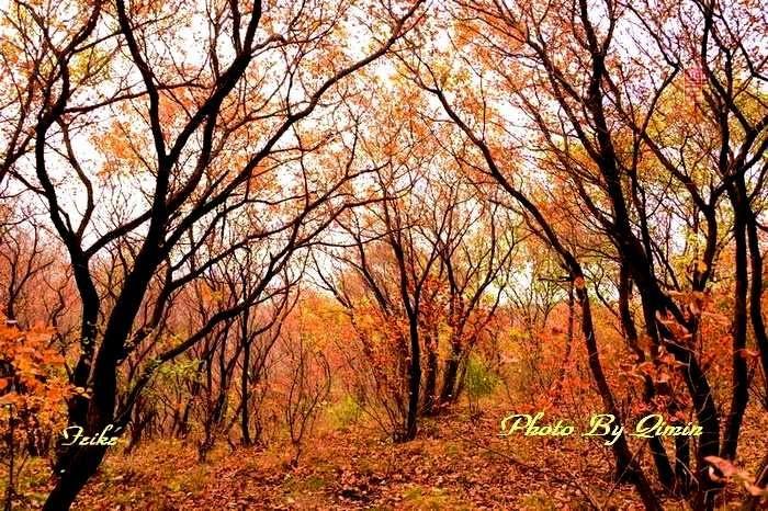 【原创影记】齐鲁观红叶——青州大牟西4 - 古藤新枝 - 古藤的博客