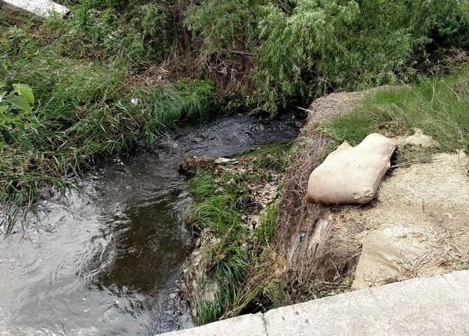 2017-6-24 影随风2017季-36 暴雨之后4 东沙河中游死了么? - stew tiger - 风过的声音