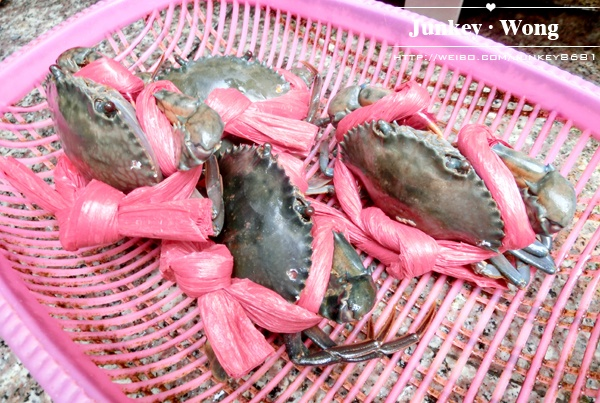 吃货的快乐生活  探秘海鲜水产市场 - Junkey大王 - Junkey大王の后花园