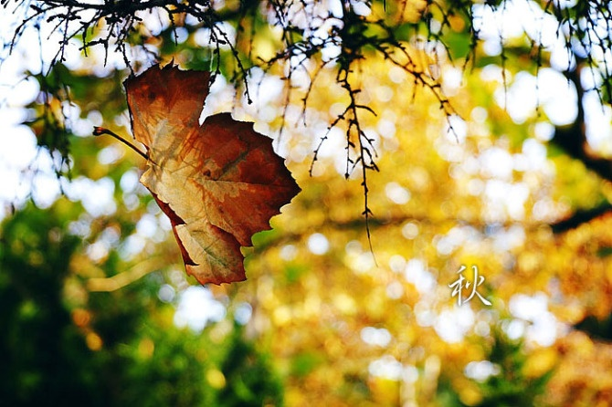 """欢秀姐的这只""""枯叶蝶"""",明亮阳光全然没有秋的落败)-捡一片秋叶"""