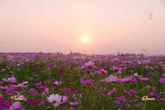 【原创影记】齐都花海4 - 古藤新枝 - 古藤的博客