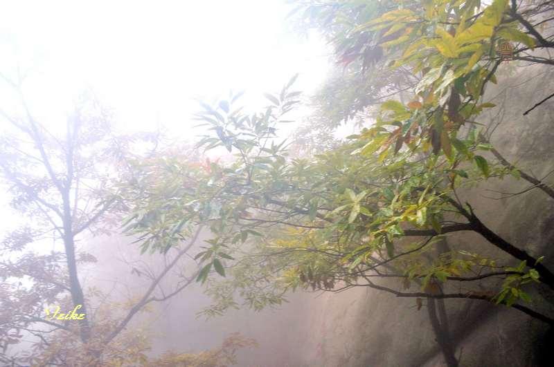 【原创影记】蒙山龟蒙行5 - 古藤新枝 - 古藤的博客