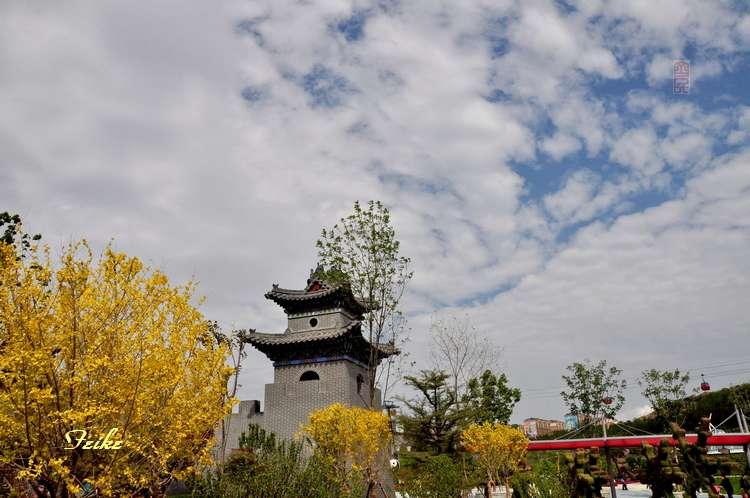 【原创摄影】走进青岛世园会 - 古藤新枝 - 古藤的博客