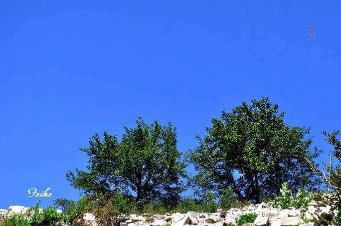 【原创影记】钟情十月蓝——印象杨集1 - 古藤新枝 - 古藤的博客