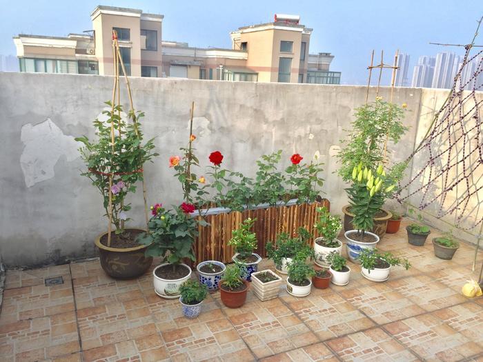 露台上的小花园 - 蔷薇花开 - 蔷薇花开的博客