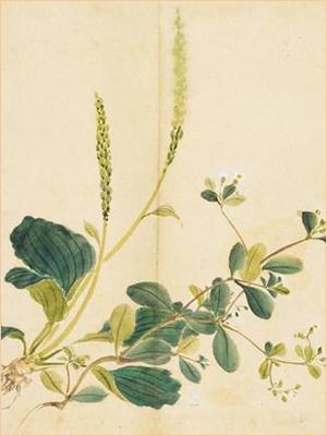 你知道吗,有一些花草的名字听着就特别美好 - 圣轩阁 - 圣轩阁