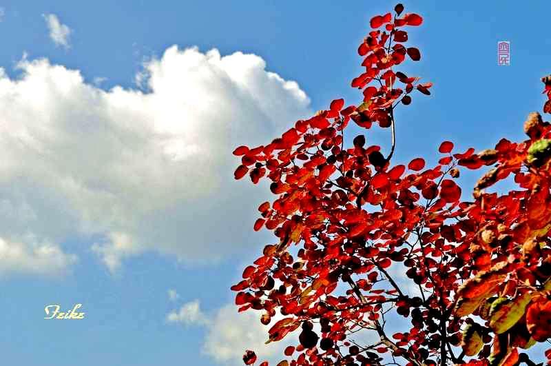 【原创影记】齐鲁观红叶——沂源凤凰山1 - 古藤新枝 - 古藤的博客