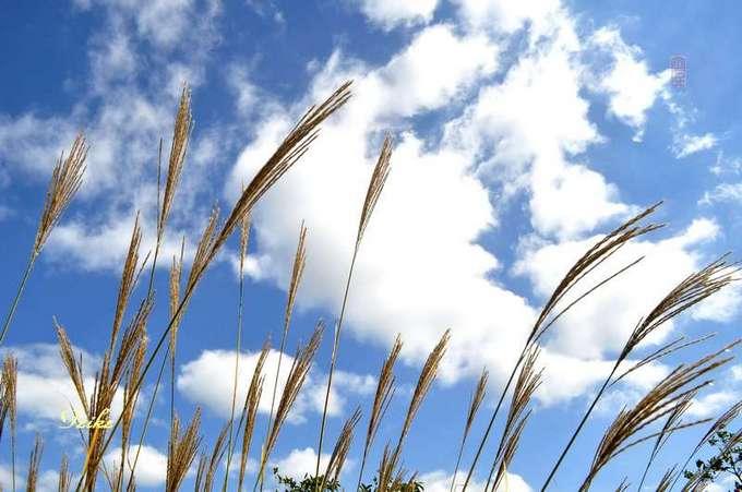 【原创影记】钟情十月蓝——醉人白云 - 古藤新枝 - 古藤的博客