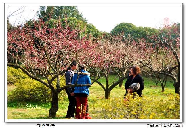 【原创摄影】江南赏梅之无锡梅园1 - 古藤新枝 - 古藤的博客