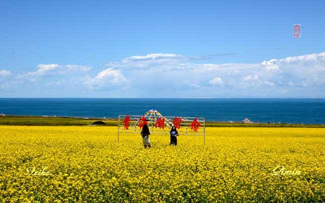 青甘记行18: 大美青海湖(五) - 古藤新枝 - 古藤的博客