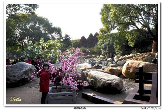 【原创摄影】江南赏梅之无锡梅园3 - 古藤新枝 - 古藤的博客