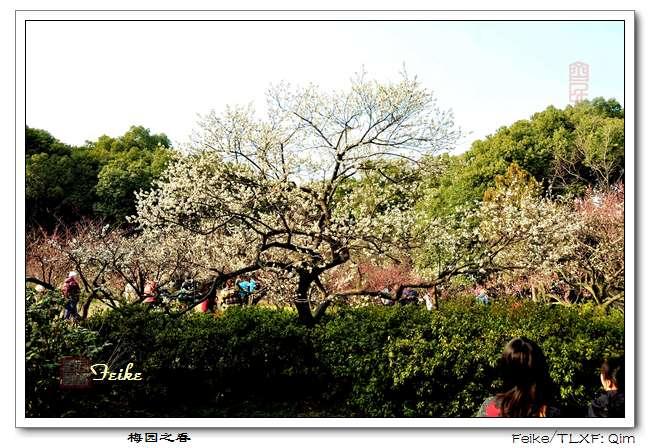 【原创摄影】江南赏梅之无锡梅园2 - 古藤新枝 - 古藤的博客
