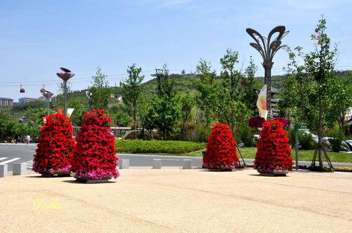 【原创摄影】走进青岛世园会——鲜花大道 - 古藤新枝 - 古藤的博客