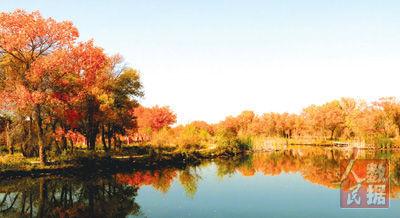 游赏金秋5:沿着塔河看胡杨 - 古藤新枝 - 古藤的博客