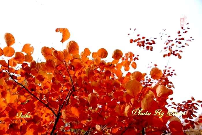 【原创影记】齐鲁观红叶——青州大牟西2 - 古藤新枝 - 古藤的博客