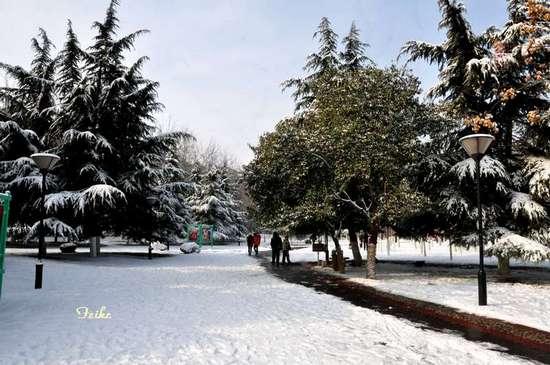 [原创摄影]公园雪景 - 古藤新枝 - 古藤的博客