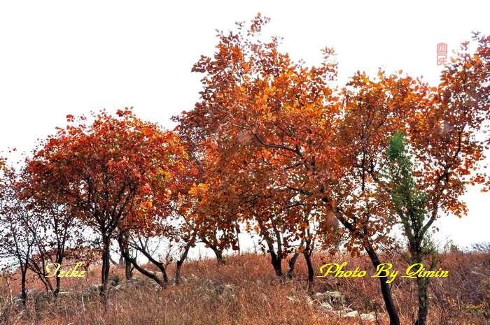 【原创影记】齐鲁观红叶——博山和尚房4 - 古藤新枝 - 古藤的博客