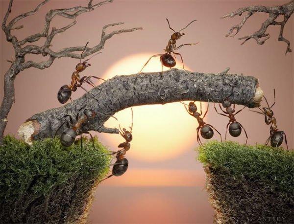 【原创】蚂蚁 - lurenlaobao2009 - lurenlaobao2009的博客