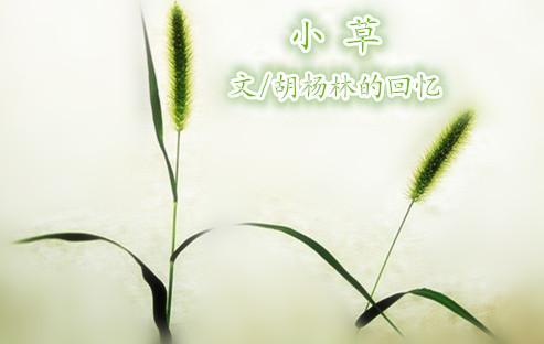 小草 - 胡杨林的回忆 - 胡杨林的回忆的博客