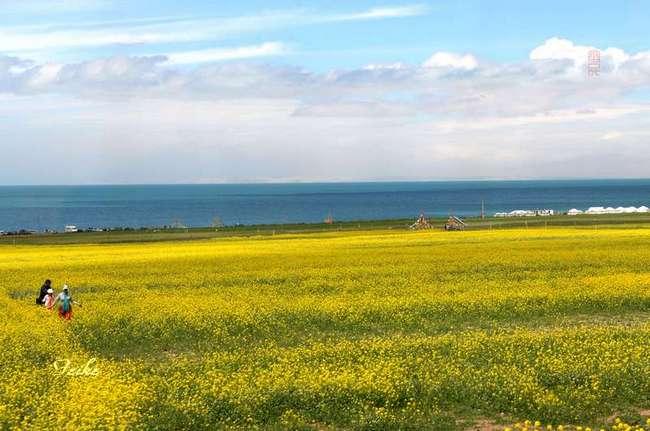 【原创影作】大美青海2——车观青海湖 - 古藤新枝 - 古藤的博客